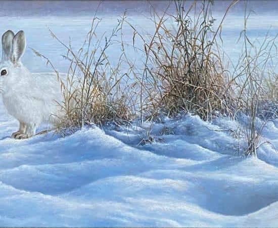 Lion Feijen, Snow Hare