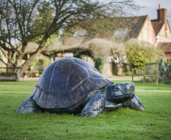 Michael Cooper, Tortoise