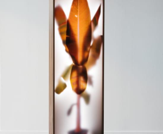 REM Atelier, Growing Plants Indoors Colors