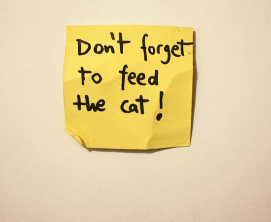 Jessi Strixner, Post its - Don't forget to feed the cat