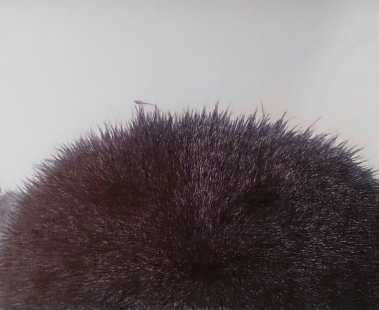 Jurga Barilaitė, Kepurė-žiurkė / Hat-rat, 2013