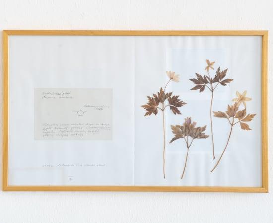 Laura Garbštienė, Iš ciklo 'Gamtos pažinimo kambarys' (77 vnt.) / From cycle 'Room of nature studies' (77 pieces), 2012
