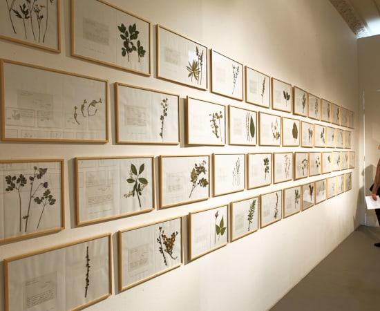 Laura Garbštienė, Gamtos pažinimo kambarys (77 vnt.) / Room of nature studies (77 pieces), 2012