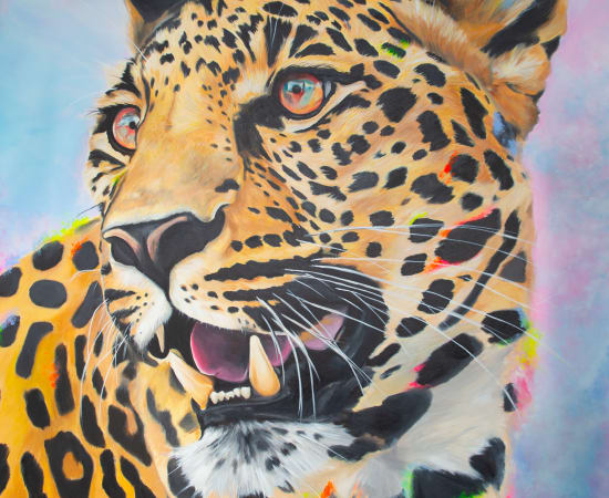 Will Mcnally, Cheeta, 2020
