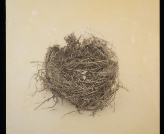 Susan Seubert, Nest 2, 2019