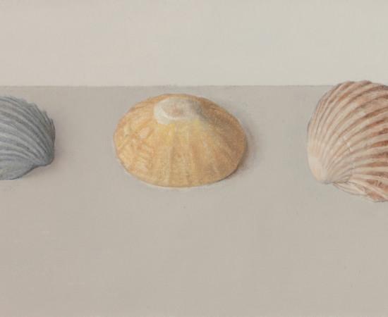 Comhghall Casey, Three Shells