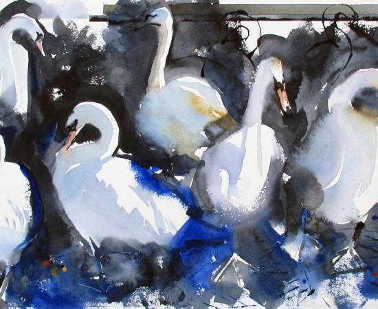 John Short, Swans in Bray Harbour (study)