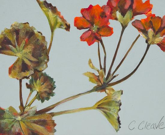 Caroline Cleave, Geranium Study