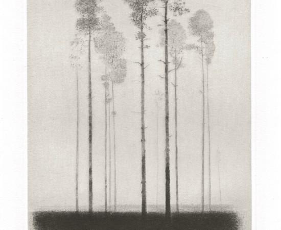 Gunnar Norrman, Tallhed, 1964