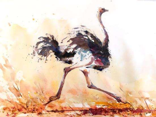 """<span class=""""artist""""><strong>Julia Cassels</strong></span>, <span class=""""title""""><em>Ostrich Run</em></span>"""