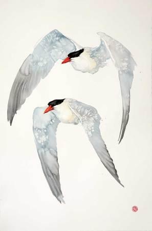 """<span class=""""artist""""><strong>Karl Martens</strong></span>, <span class=""""title""""><em>Caspian Terns</em></span>"""