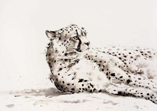 """<span class=""""artist""""><strong>Julia Cassels</strong></span>, <span class=""""title""""><em>Cheetah Siesta</em></span>"""