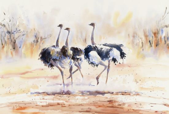 "<span class=""artist""><strong>Julia Cassels</strong></span>, <span class=""title""><em>Ostrich Chase</em></span>"