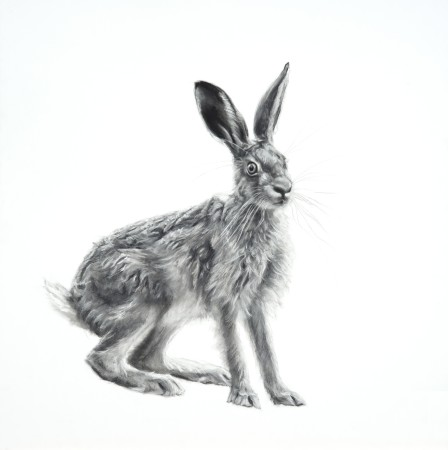 "<span class=""artist""><strong>Lucy Boydell</strong></span>, <span class=""title""><em>Wild Hare</em></span>"