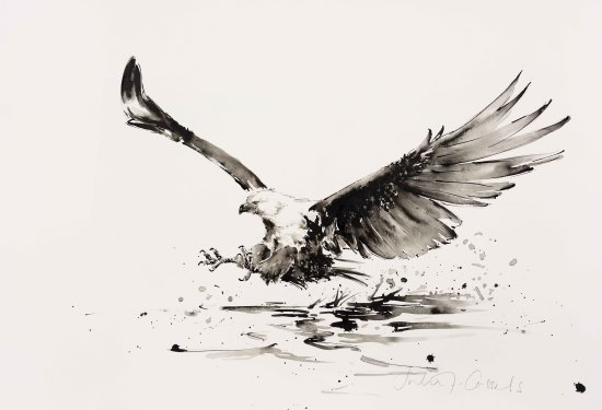 "<span class=""artist""><strong>Julia Cassels</strong></span>, <span class=""title""><em>African Fish Eagle</em></span>"