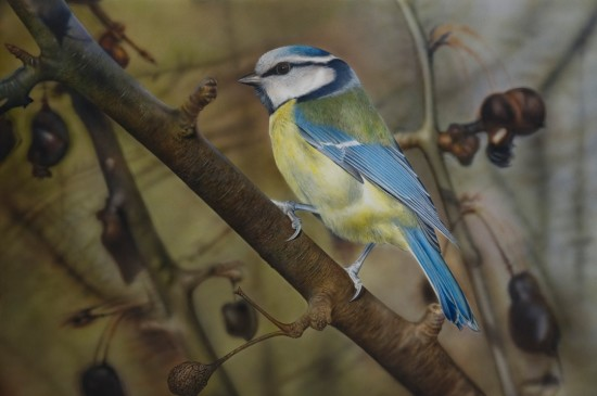 <span class=&#34;artist&#34;><strong>Adrian Smart</strong></span>, <span class=&#34;title&#34;><em>Blue Tit II</em></span>