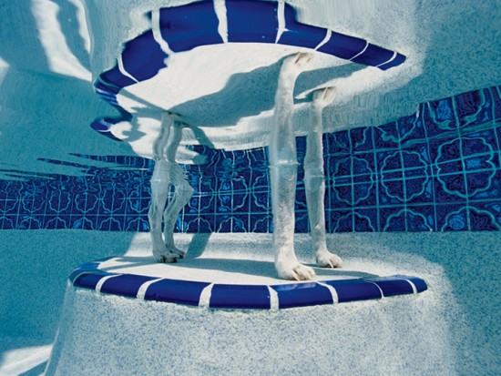 <p><strong>Alex Kirkbride&nbsp;</strong></p><p>Bubba, Greg and Julie's pool, Crystal River, Florida</p>