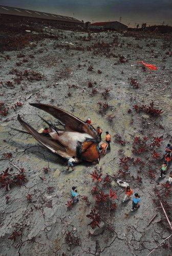 A Little Bird in the Beijing Suburbs, 2011
