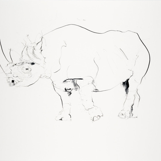Rhino II, 2013