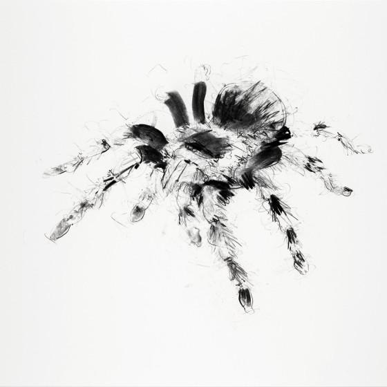 Tarantula, 2013