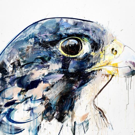 Perregrin Falcon, 2014