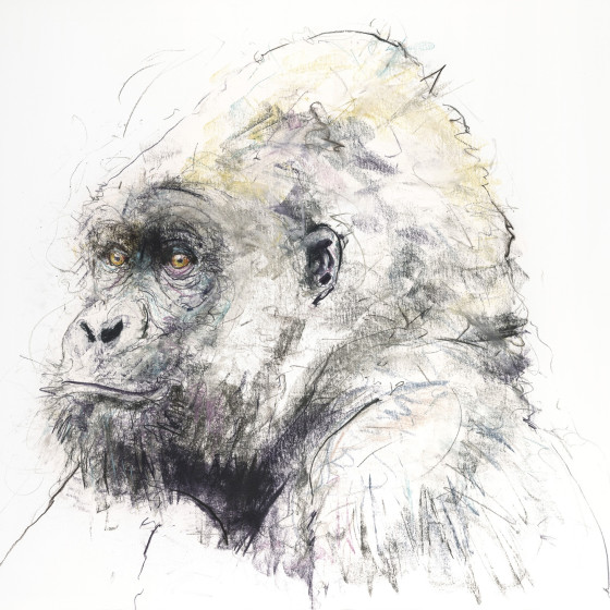 Gorilla II