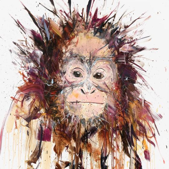 Orangutan V Edition