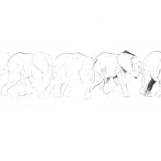Elephant Movement, 2017