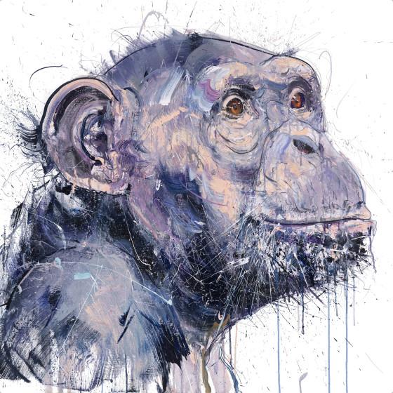 Old Chimp I
