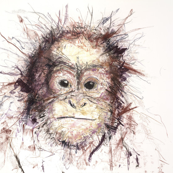 Orangutan IV, 2016