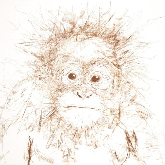 Orangutan I, 2016