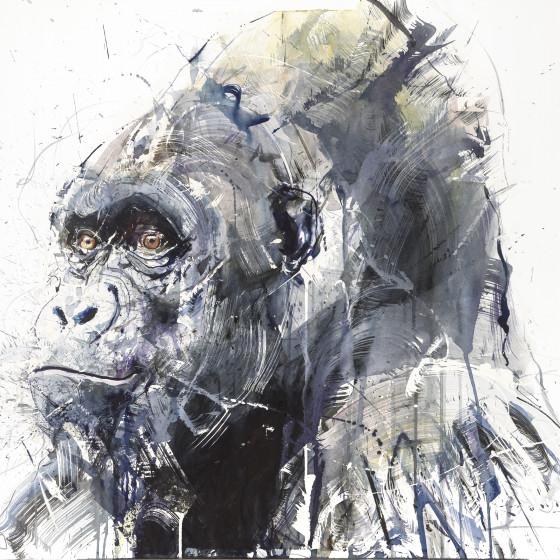 Gorilla III, 2016