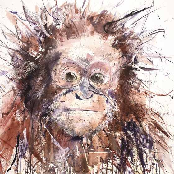 Orangutan V, 2016