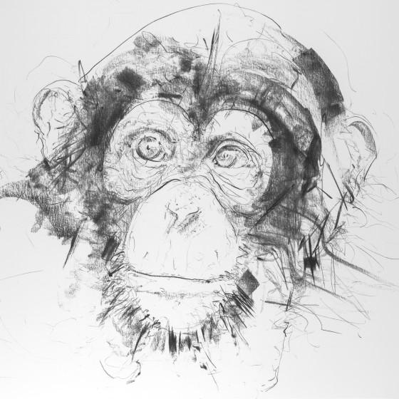 Chimp V, 2017