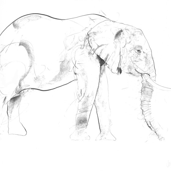 Elephant III, 2017