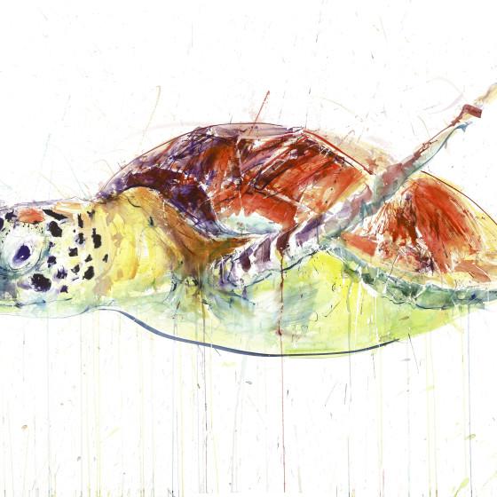 Sea Turtle II, 2017