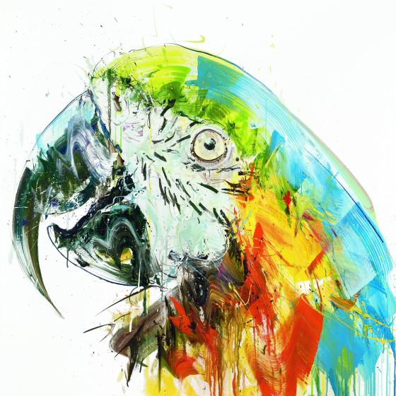 Parrot II, 2017