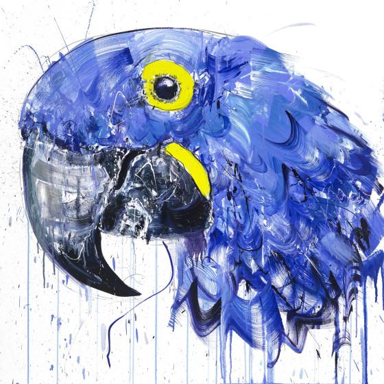 Spix Macaw, 2018