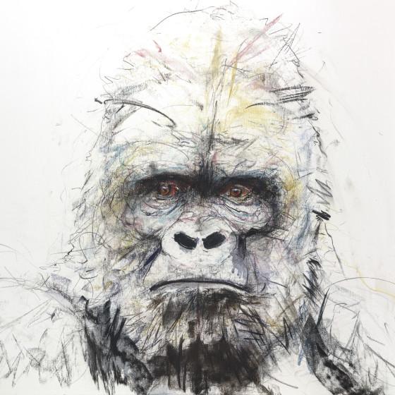 Gorilla I, 2016