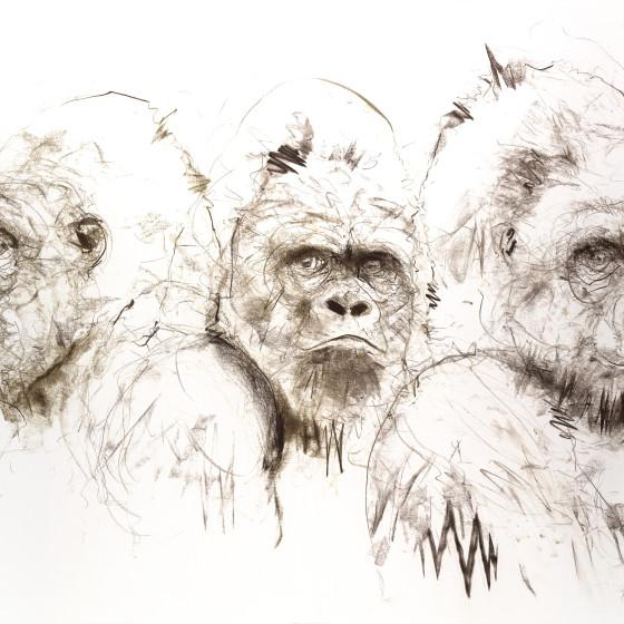 Gorilla IV , 2016