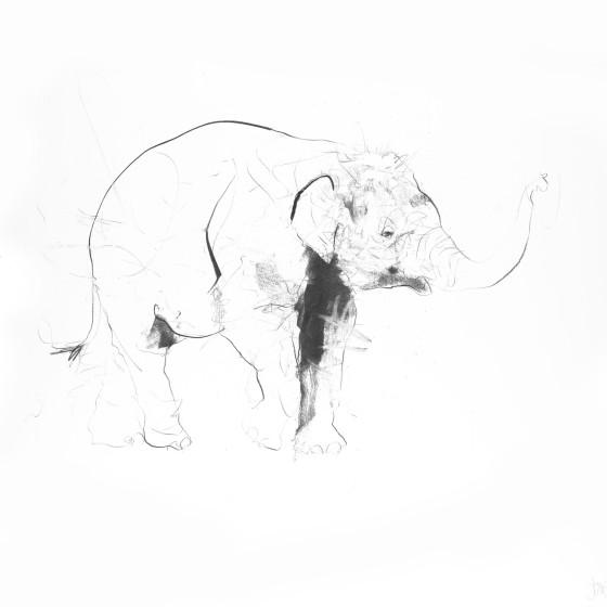 Elephant II, 2017