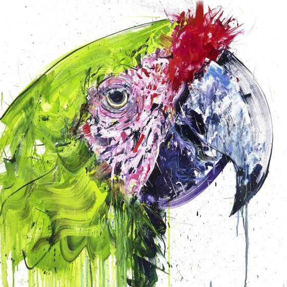 Buffon Macaw, 2018
