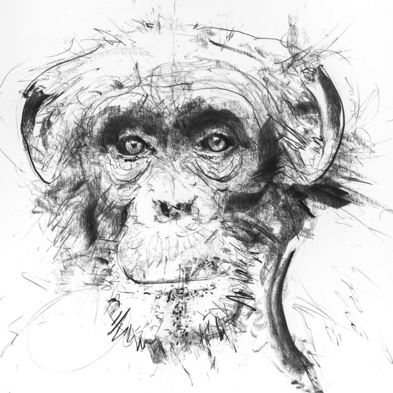 Chimp II, 2017