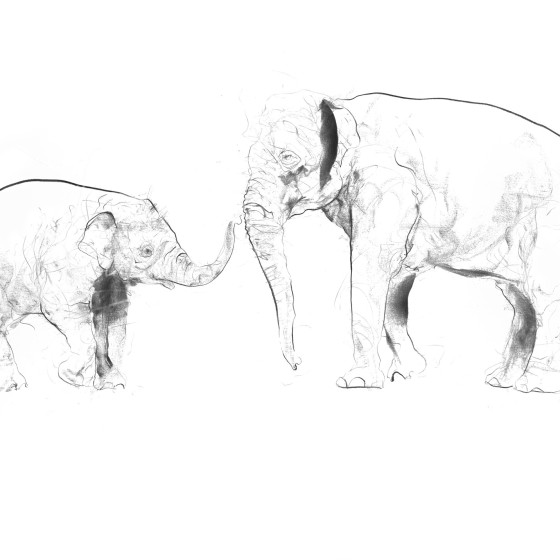 Elephant and Calf , 2017