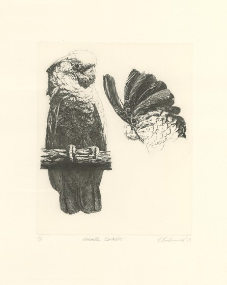 Umbrella Cockatoo (Plate 8)