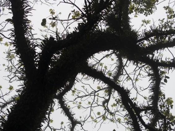 Kitty Chou, Trees 2016 - 0640A, 2016