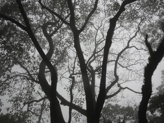 Kitty Chou, Trees 2016 - 8085, 2016