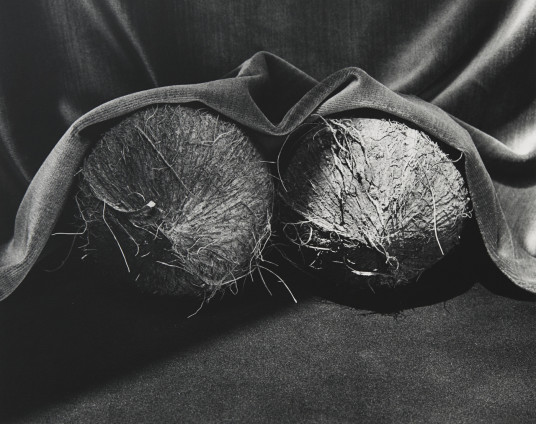 Robert Mapplethorpe  Coconuts, 1985  Silver Gelatin Print  50.8 x 40.6 cm, 20 x 16 ins paper size  Edition 3/10