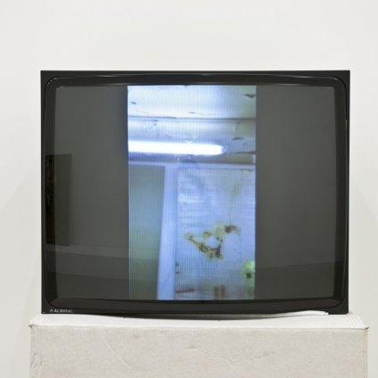 Ian Kiaer  Black tulip, companion, 2012  cube monitor, DVD, cardboard  Monitor: 46.7 x 58.7 x 41.3 cm / 18 3/8 x 23 1/8 x 16 1/4 ins Cardboard box: 64.8 x 62.2 x 61 cm / 25 1/2 x 24 1/2 x 24 ins