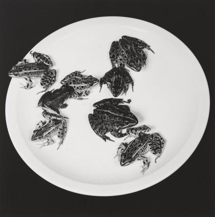 Robert Mapplethorpe  Frogs, 1984  Silver Gelatin Print  50.8 x 40.6 cm, 20 x 16 ins paper size 73.3 x 60.1 cm, 28 7/8 x 23 5/8 framed  Edition 4/10